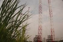 Les antennes sont installées au milieu d'une végétation parfois dense