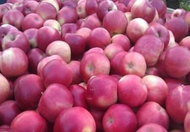 Rusija ponovno zabranila uvoz jabuka iz BiH