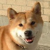 探知犬シバ