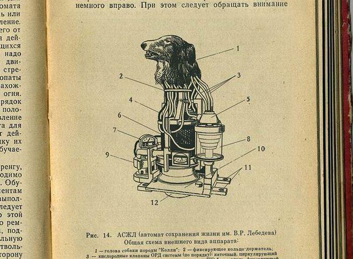 """В первый период холодной войны были привлечены все силы советской науки для создания совершенного оружия. В 1958 году стартовал секретный советский проект по созданию робота-киборга. Научным консультантом был лауреат Нобелевской премии В. Мануйлов. В конструировании робота за исключением конструкторов участвовали медики и инженеры. Для экспериментов с целью подтверждения безопасности для человека предлагались мыши, крысы и собаки. Рассматривался вариант экспериментов над обезьянами, но выбор пал на собак, так как они лучше поддаются дрессировке и более спокойны чем обезьяны. Впоследствии этот проект получил имя """"КОЛЛИ"""" и просуществовал почти 10 лет. Но указом ЦК от 4 января 1969 года деятельность проекта """"Колли"""" была прекращена, информация стала секретной...""""    В 1991 году все данные по поекту """"КОЛЛИ"""" были рассекречены...    В 1991 году вся информация о проекте """"Kollie"""" стала не секретной."""
