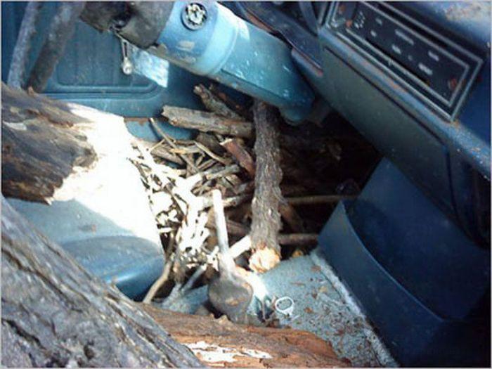 Приготовление бекона и яичницы на автомобиле (29 фото)