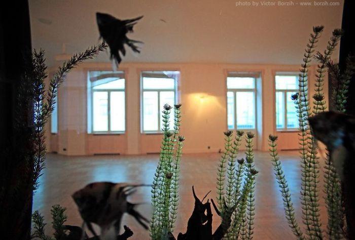 Дома Рублевки (47 фото)
