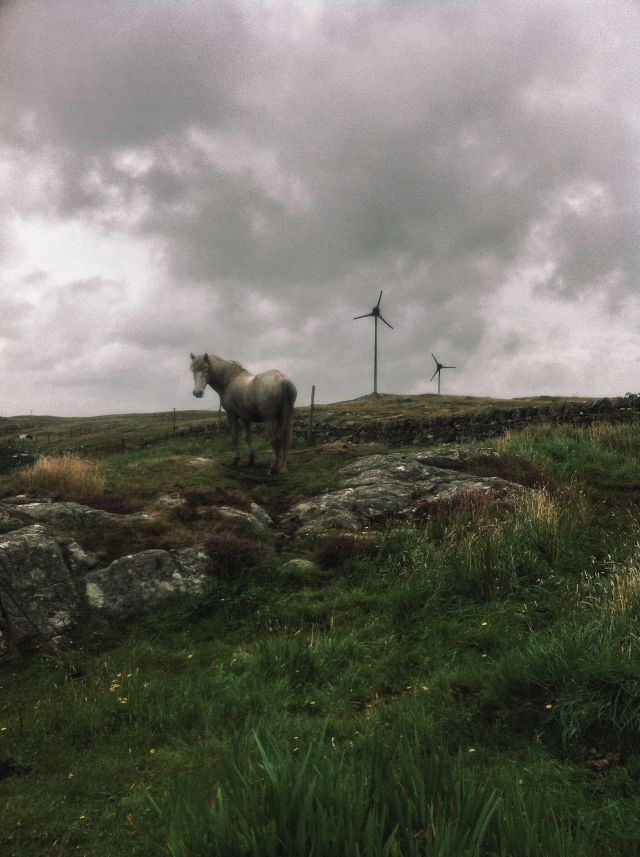 Horse Power on Barra.