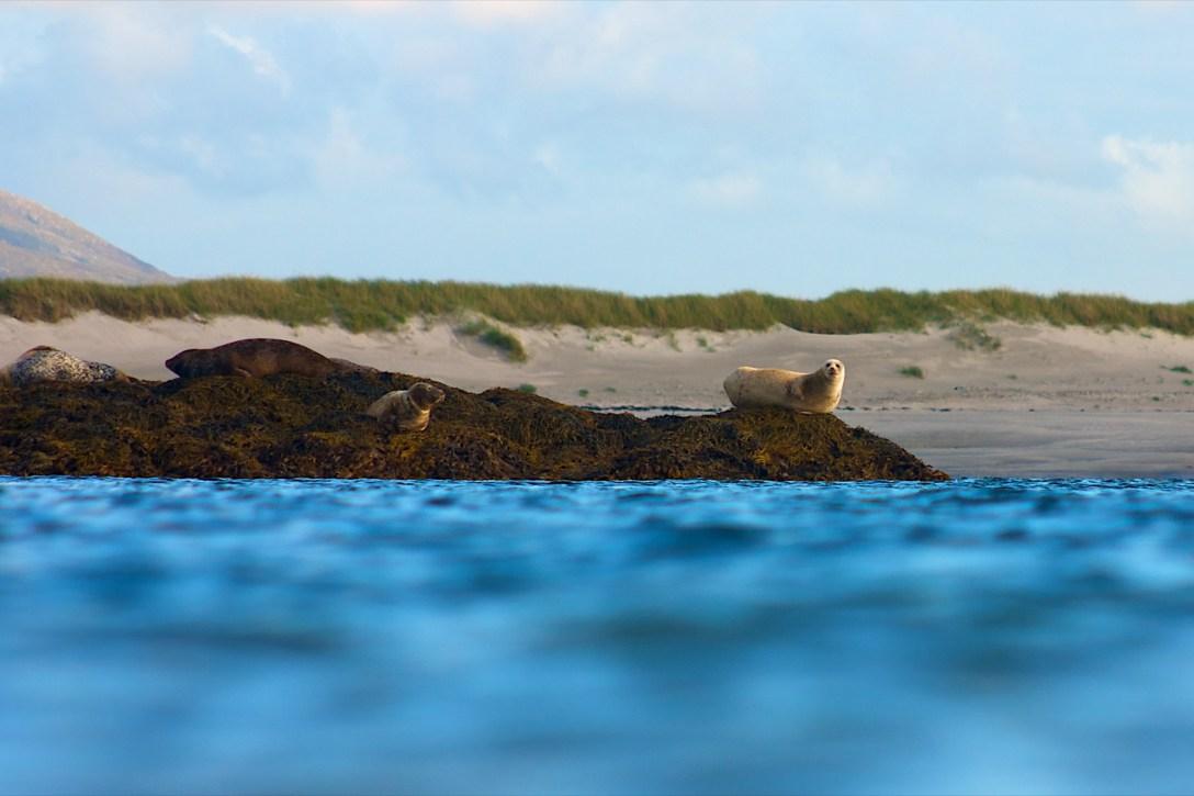 Resting offshore. Benbecula.