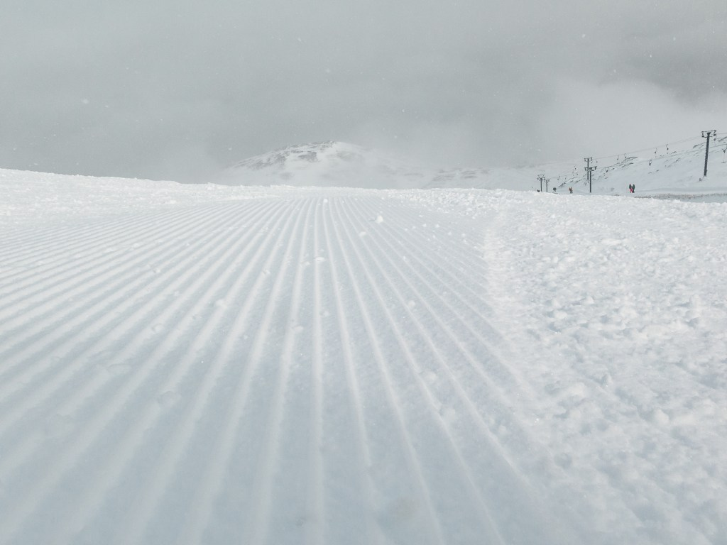 Groomers in Main Basin