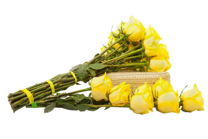 Fabricante de Gomas Elásticas Bandex Flores