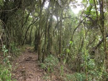 Pasochoa - Ecuador (2010)