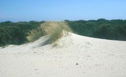 Cadiz - dunas de bolonia