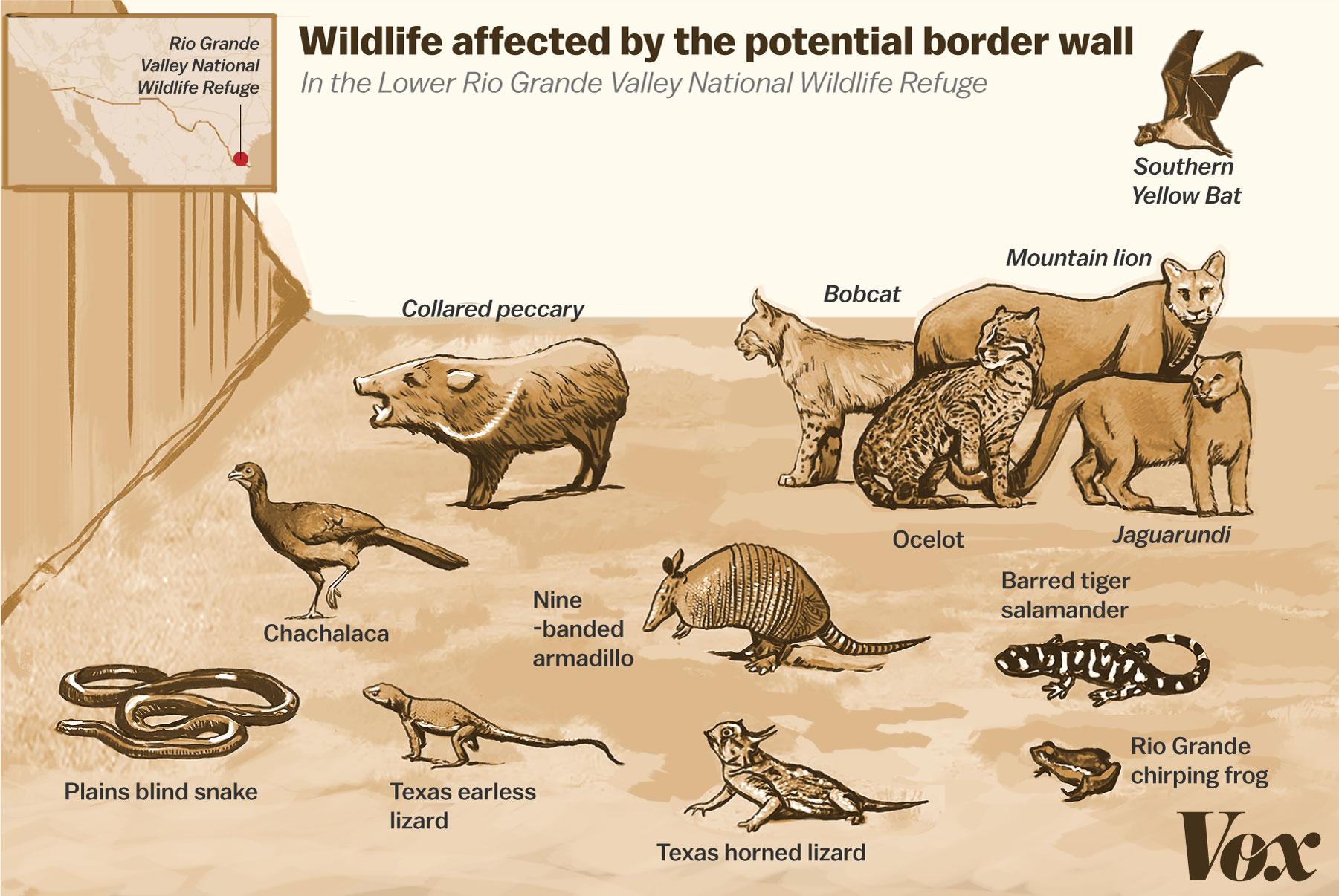 Border Wall Wildlife