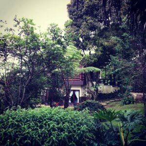 Suasana Villa Kawah Ratu House di Gunung Salak Endah, masih asri dengan tumbuhan hijau