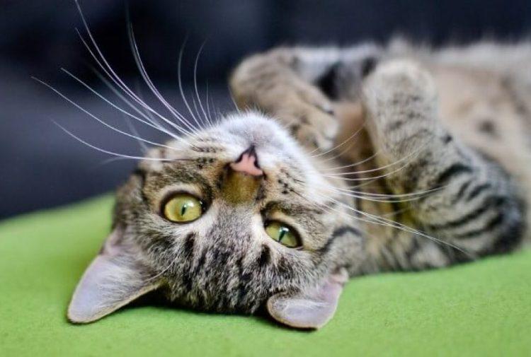 """Картинки по запросу """"коти фото"""""""