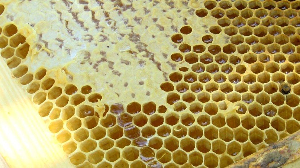 На Житомирщині розводять бджіл, які не жалять людей