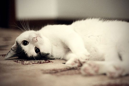 Cute Cat Gif Wallpaper 10 Upside Down Cats Of The Internet Ruby Canoe Home