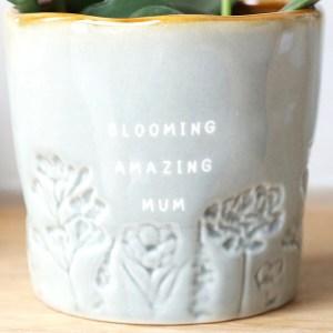Glazed Ombre Blooming Amazing Mum Plant Pot