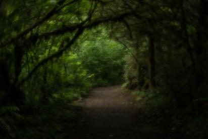 velvet-pathways