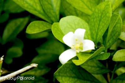 Hidden bloom by rubys polaroid