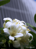 white beautys by rubys polaroid