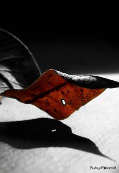 Leaf shadows by rubys polaroid