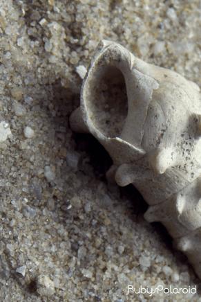 Shell shot by rubys polaroid