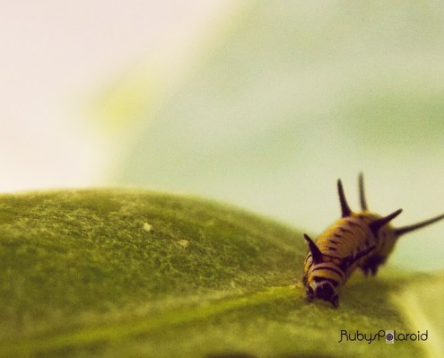 Caterpillar 2 by rubys polaroid