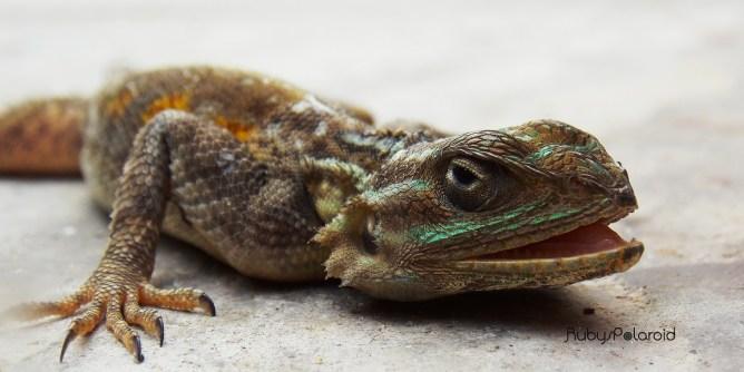 Lizard Up Close by rubys polaroid