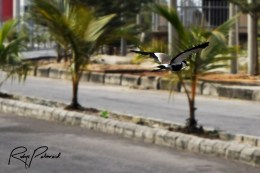 Local Bird 3