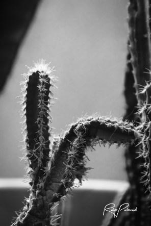 Cactus Dance BW by rubys polaroid