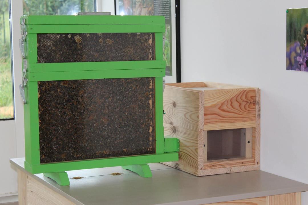 visitez la miellerie le rucher du marandou dordogne périgord
