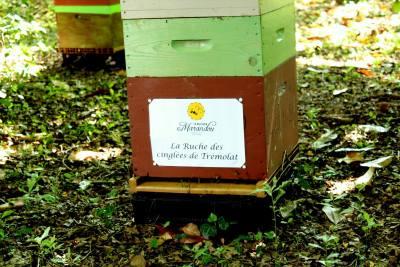 parrainer ruche 31 - rucher de marandou