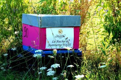 parrainer ruche 17 - rucher de marandou