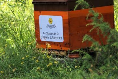 parrainer ruche 10 - rucher de marandou