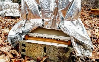 Nous devons trouver des solutions pour sauver nos abeilles !!!