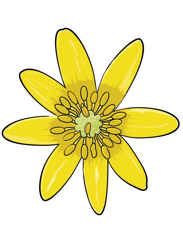 Schulbuch Projektbild Bestimmungsschlüssel für Pflanzenfamilien