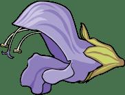 Detail - Lamiaceae (medow sage)