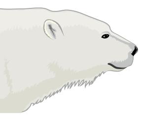 Detailausschnitt - Eisbär (Ursus maritimus)