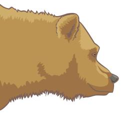Detail - Grizzly Bear (Ursus arctos horribilis)