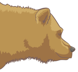 Detailausschnitt - Grizzlybär (Ursus arctos horribilis)