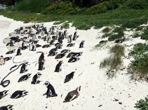 Pinguine Neuseeland