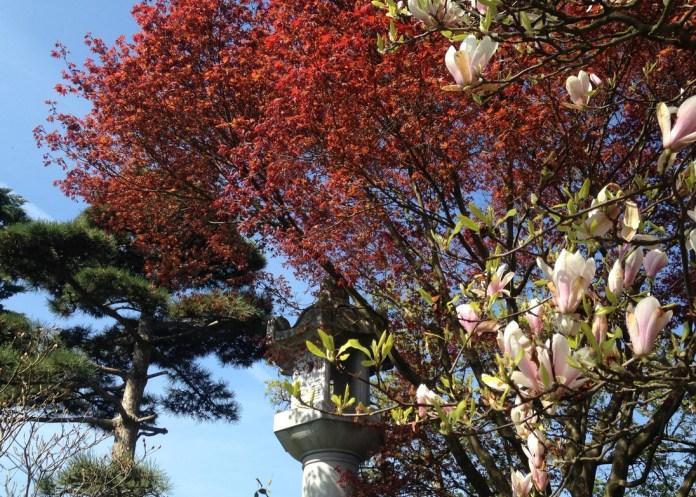 Es blüht im japanischen Garten Freiburg