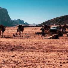 wadi-rum-wielblady-pustynia