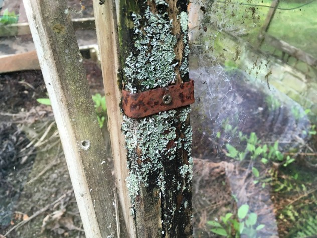 bracket holding the wood frame of the greenhouse with lichen growing on it