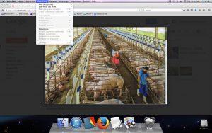 Bild - Fleischindustrie JPEG Kopie