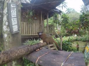 monkey at the posada fin del mundo