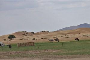 At the edge of the Gobi sand desert