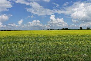 Field in the Altay