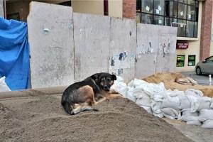 Hund in Tbilissi, Georgien
