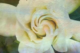 tamara fleur 1