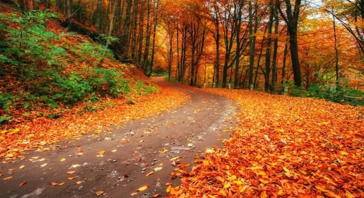 אקססוריז לסתיו