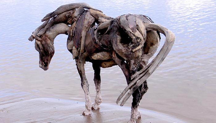 driftwoodfoul
