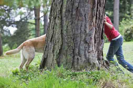 hide & seek, dog playing hide and seek with owner
